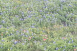 bluebonnets- Tips to Help Occupy Your Kids During Road Trips- Corpus Christi Moms Blog