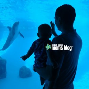 Texas State Aquarium Dolphin- Corpus Christi Moms Blog Family Resource Guide to Visiting the Corpus Christi Area