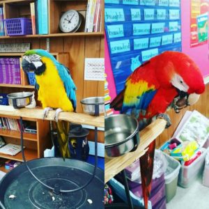 parrots- Never Forget Our Third Grade Adventure (A letter to my students)- Corpus Christi Moms Blog