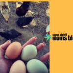 Fowl Play: Raising Children and Chickens!