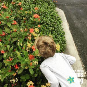 timmy-flowers
