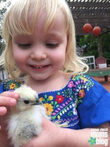 keeping-chickens-corpus-christi-mom-blog