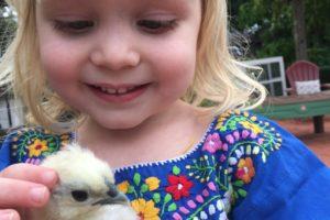 Our Family's New Love: City Chicks- Raising Silkie Chickens- Corpus Christi Moms Blog