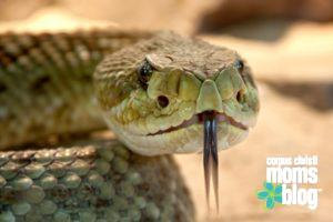 Please Don't Ask My Son to Touch the Snake- Corpus Christi Moms Blog