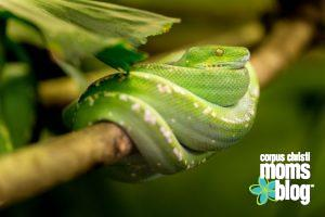 Please Don't Ask My Son to Touch the Snake- Green Snake- Corpus Christi Moms Blog