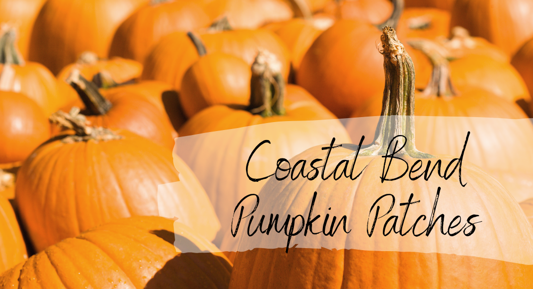 Guide to Pumpkin Patches__ Coastal Bend __ Corpus Christi Moms Blog.png