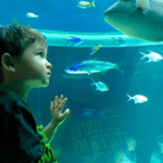 We Love the Coastal Bend : Series || The Texas State Aquarium