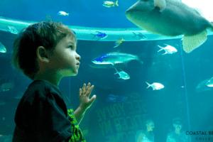My Thing - Texas State Aquarium